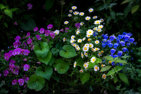 6月の花園