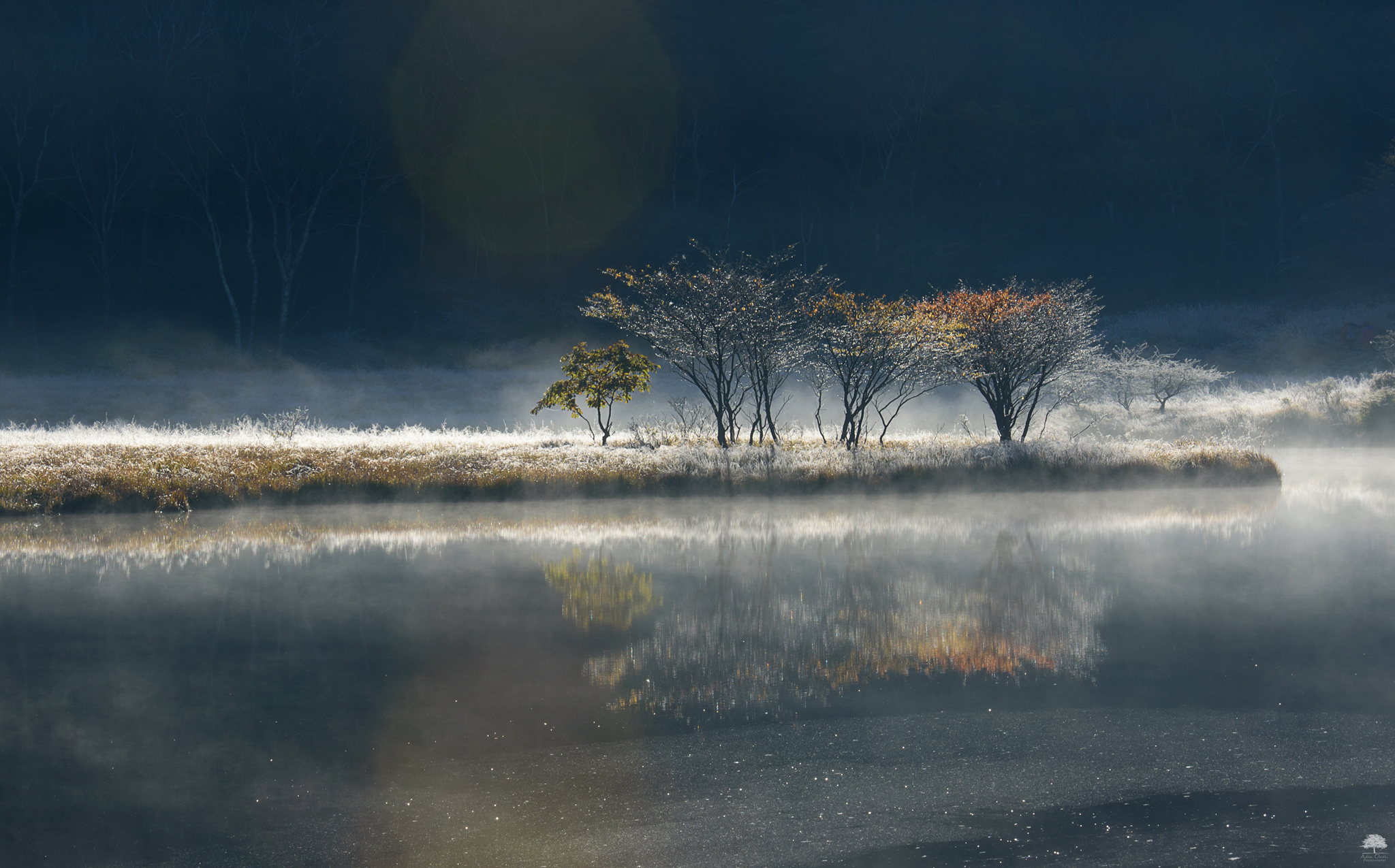 晩秋の煌めき