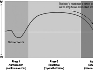 Stress, adaptation and overload - principles at the heart of training.