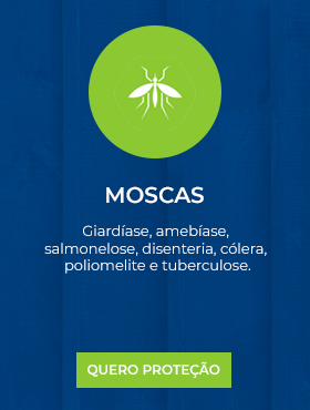 Moscas.png