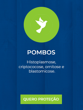 Pombos.png