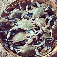 Live Blue Crab