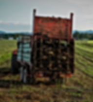 Tractor with manure spreader on a field