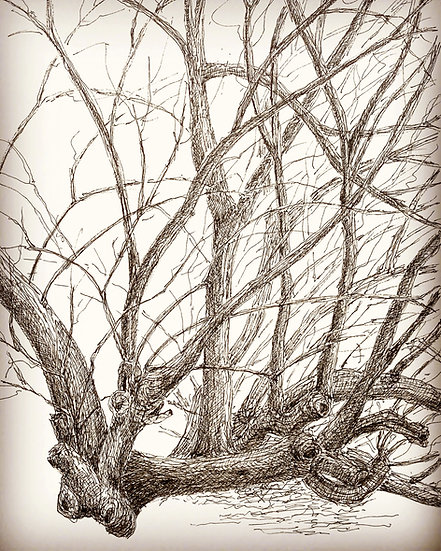 Solitree - Solitary Willow
