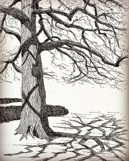 Solitree - Solitary Oak with shadow