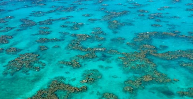 Bahamian Boil Fish