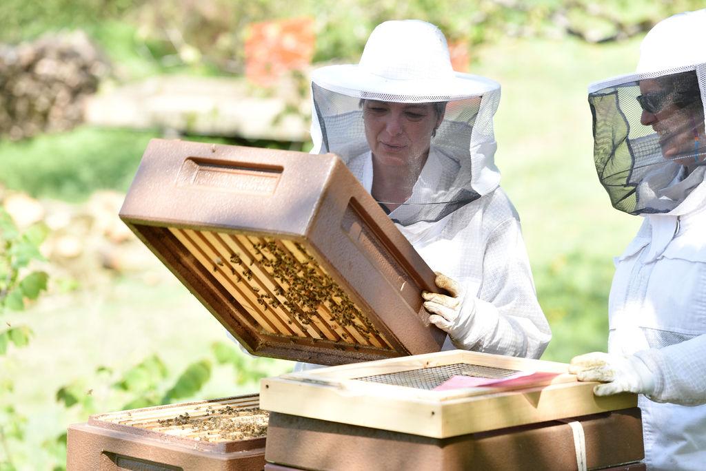 Der Honigraum ist noch ganz leicht