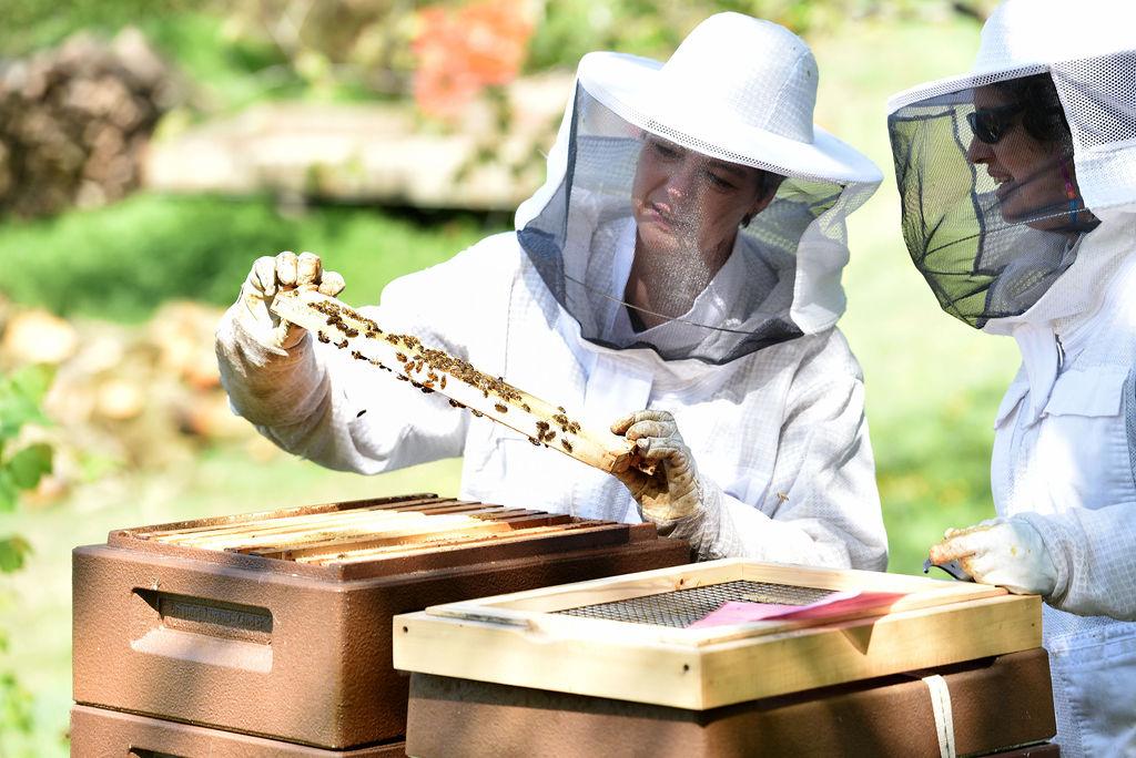 Das wird was mit dem Honig :-)