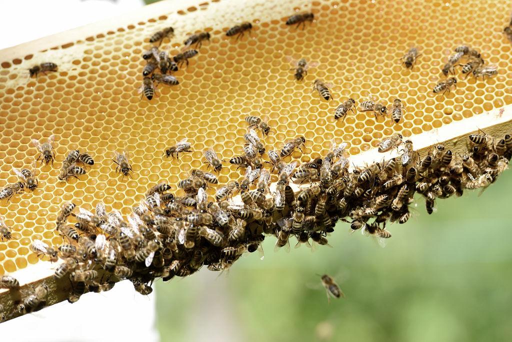 Fleissige Honigproduzentinnen