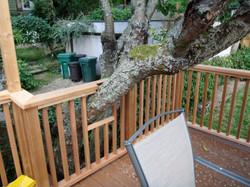 Fremont Deck Accomodating Tree
