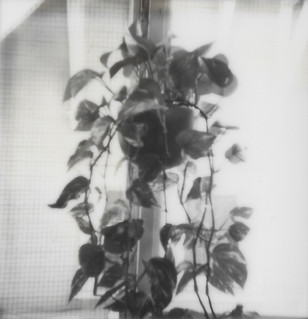 A Plant in the Window.jpg