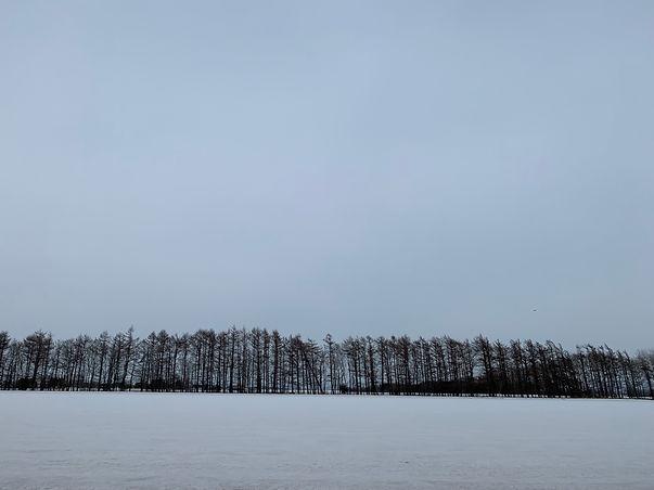 冬の木.jpeg