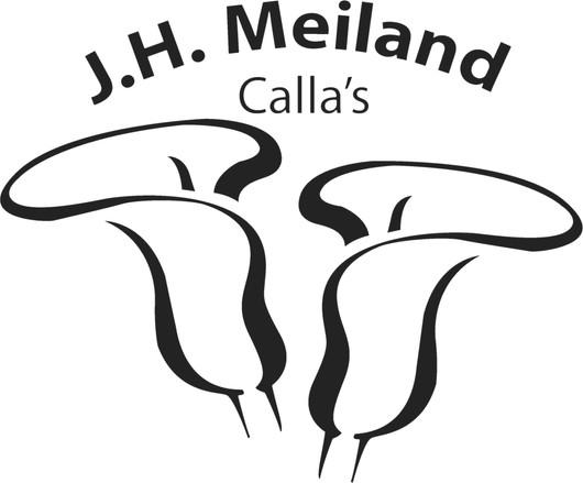 Meiland Calla's