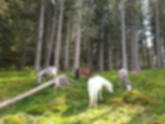 Waldweide Gampelen.jpg