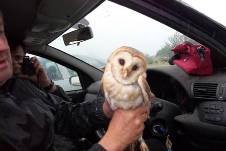 Owl in car