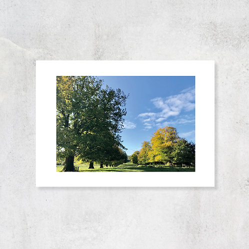 Avenue of Limes Tring Park A4 Art Print with Card Mount