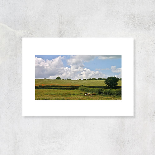 Chiltern Hills Poppies and Ponies at Pednor | A4 Art Print with Card Mount