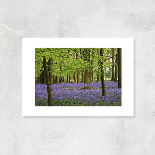 Chiltern Hills A4 Art Print with Card Mount