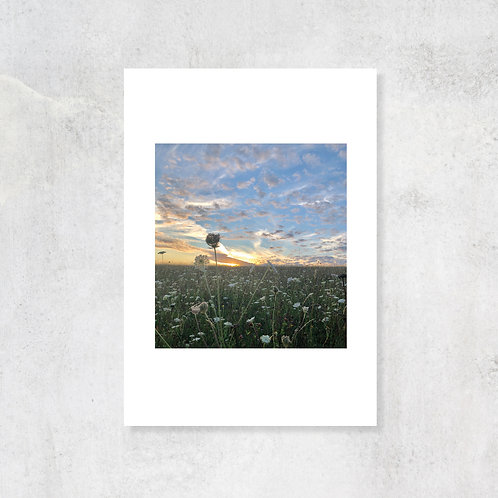 Chilterns Summer Fields A4 Art Print with Card Mount