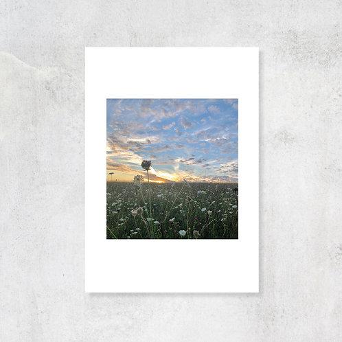 Chilterns Summer Fields A4 Art Print with Card Mount