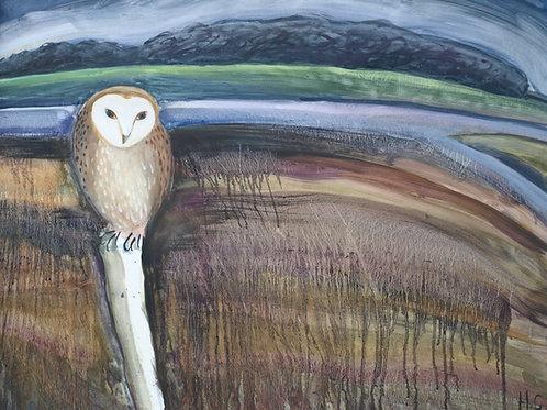 Barn Owl at Snape