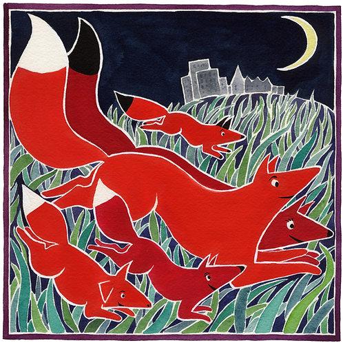 Red Fox Family Running
