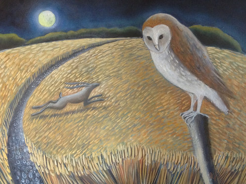 Barn Owl in the Corn