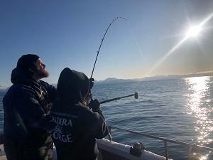 Homer Alaska Winter King Fishing