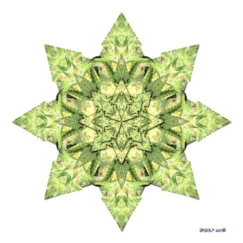 Star Canna 3