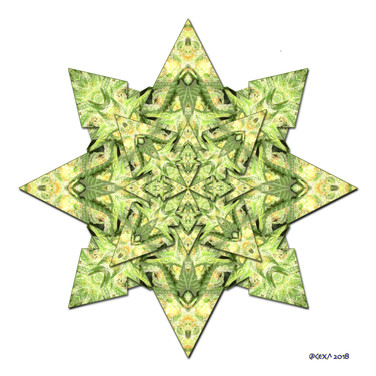 Star Canna 1