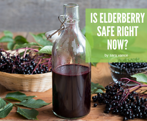 Is Elderberry Safe Right Now?