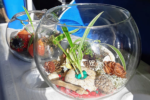 sea nature open terrarium