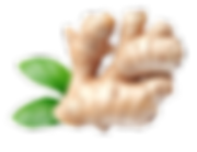 Ginger-PNG-Download-Image.png