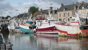 Poissons et Crustacées : Arrivage de la Halle à Marée de Port-en-Bessin