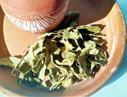 Yerba Santa Smudging Herb