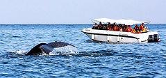 balenas.jpg