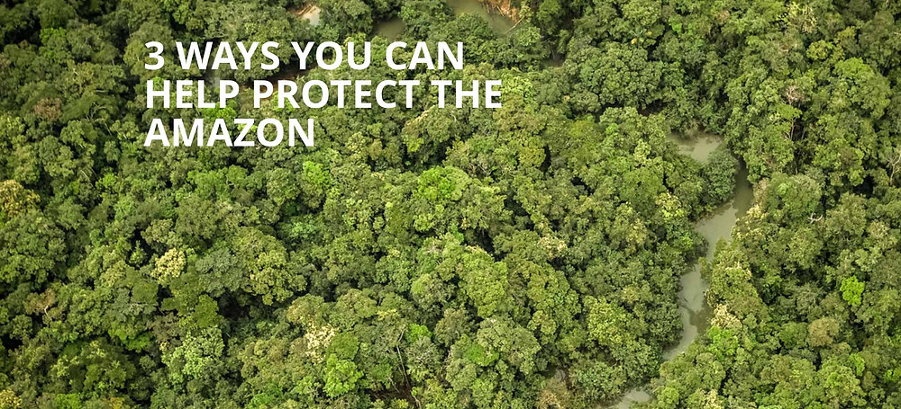 amazon forest link