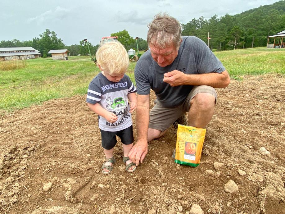 planting pumpkins.jpg