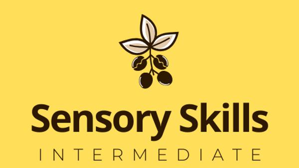 Sensory Skills Intermediate