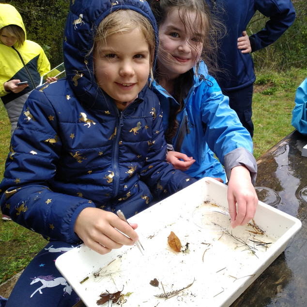 Freshwater critters