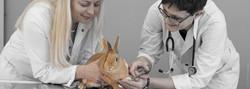 Tierarztpraxis_Ottensheim_©Susanne_Poseg