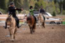 Bue til hest mai 2019-5040298.jpg