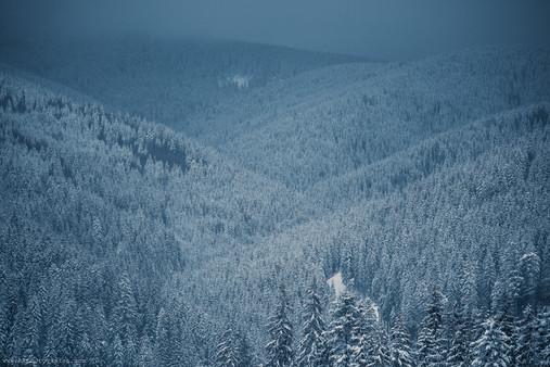 HKP_7627_Landscape_Winter_Bukovel_web.JP