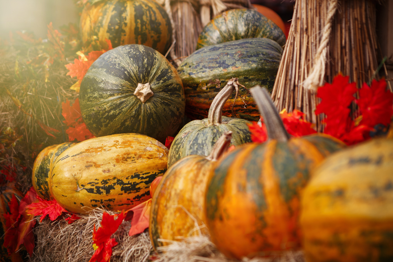 IMG_1081_Food_Pumpkin_01_1280