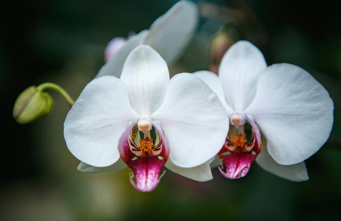 HKP_1624_Flowers_col_web.JPG