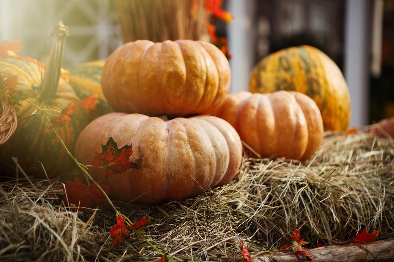 IMG_1037_Food_Pumpkin_01_1280
