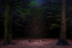 Ellie-Davies-Stars-2014-1 - copie.jpg