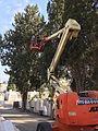 כריתה וגיזום עציםעם מנוף