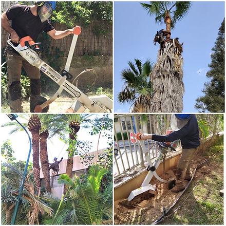 גיזום עצים , כריתת עצים , כרסום שורשים , ניקוי דקלים