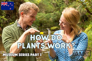 2020-05-How-Do-Plants-Work-Cover-1200-80